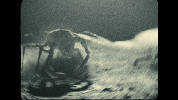 Moon rock spider apollo 18
