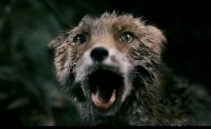 Antichrist-Fox-Cropped