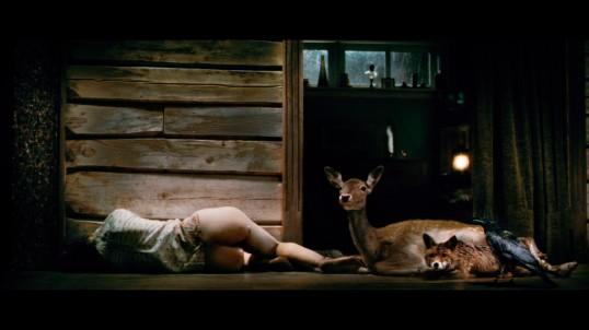 she sleep deer fox crow