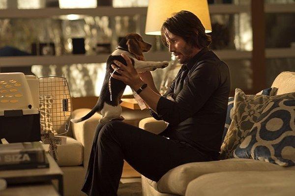 Keanu Reeves dog