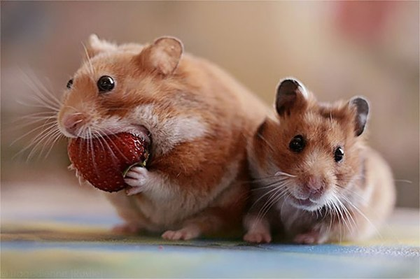 animals-eating-berries-101__605