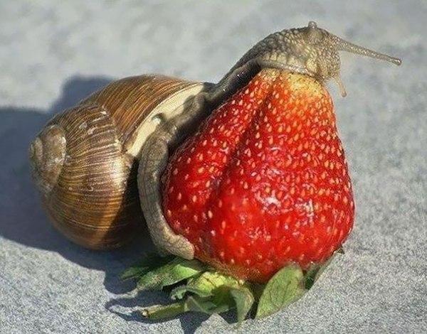 animals-eating-berries-91__605