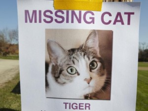 Lost_Cat_Poster