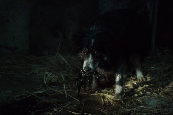 creepy-dog-the-hallow-2015-horror-film-mevnxzn5h4k6y9dy4hw2ugttgviaw4kq9b6en7n5s0